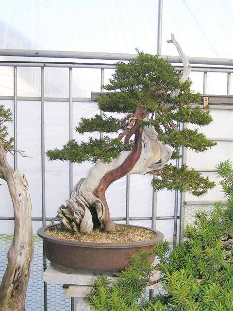 Akademia Bonsai